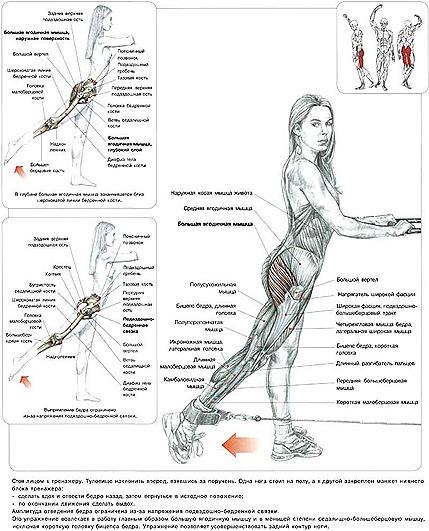 Силовые упражнения и целлюлита